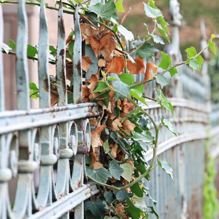 Paris : 4 terrasses cachées par un écrin de verdure